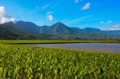 Kauai Taro Fields Stock Afbeeldingen