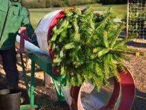 Kaufen eines Weihnachtsbaums Lizenzfreies Stockbild
