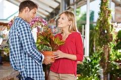 Kaufende Anlage der Paare in Garten-Center stockbilder