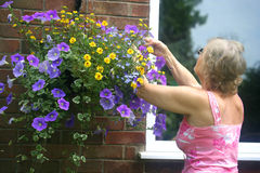 Kaukasische Frau, die zu ihrem Blumenkorb neigt lizenzfreie stockfotos