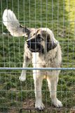 Kaukasische herdershond achter de bars van de hondschuilplaats stock foto's