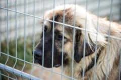 Kaukasische herdershond achter de bars van de hondschuilplaats royalty-vrije stock afbeeldingen