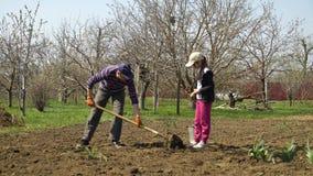 Kaukasische landbouwer en zijn dochter die aardappels op landbouwbedrijf in de vroege lente planten stock videobeelden