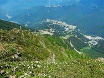 Kaukasische Rhododendren Lizenzfreie Stockfotos