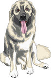 Kaukasischer Schäferhundhund Lizenzfreies Stockfoto