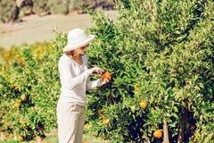 Kaukaska dziewczyna zbiera mandarynki i pomarańcze wewnątrz Zdjęcie Royalty Free