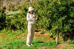 Kaukaska dziewczyna zbiera mandarynki i pomarańcze wewnątrz Obrazy Stock