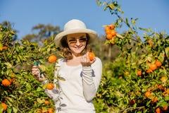 Kaukaska dziewczyna zbiera mandarynki i pomarańcze wewnątrz zdjęcie stock