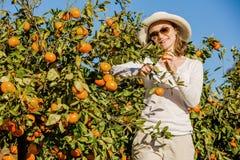 Kaukaska dziewczyna zbiera mandarynki i pomarańcze wewnątrz obraz royalty free