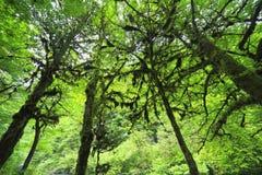, Kaukasus berg, Abchazien, Georgia Arkivbilder