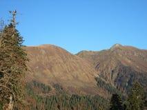 Kaukasus berg och barrskog, granglänta Arkivfoto