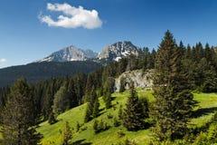 Kaukasus-Berge, Dombay Lizenzfreie Stockfotos