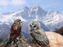 Kaukasus-Berge und Eulen Stockfoto