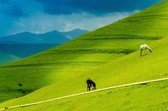 Kaukasus-Landschaft Stockbilder