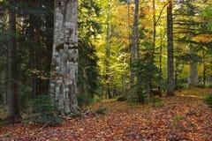 Kaukasus skog arkivbild