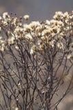 Kaukasuset Den е för ½ för ½ Ð för ФÐ-¾ Ð hösten blommar i en äng Bakgrunden är inte in fokusen Royaltyfri Bild