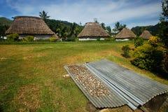 Kava rotar uttorkning i den Navala byn, Viti Levu, Fiji royaltyfria foton
