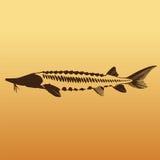 Kaviar-Konzept-Designe Stockfotos