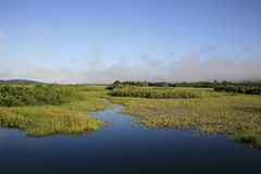 Kaw-Roura National Nature Reserve, French Guina. Located few miles southeast of Cayenne and straddling the towns of Roura and Regina, Kaw marshes are surrounded Royalty Free Stock Images