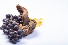 Kawałek stara winorośl i wiązka czarni winogrona na białym tle fotografia stock