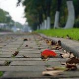 Kawałek czerwony liść na ulicie Fotografia Royalty Free