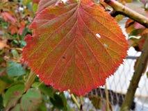 Kawałek jesień w nasz ziemi w kolorowym liściu Zdjęcie Royalty Free