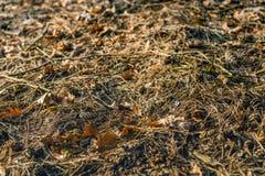 Kawałek lasowa podłoga w jesiennych kolorach od zakończenia Zdjęcia Stock