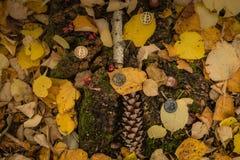 Kawałek moneta na jesieni ziemi obrazy royalty free