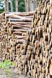 Kawałki drewno po ciąć zdjęcie royalty free