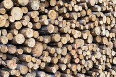 Kawałki drewno po ciąć zdjęcia stock