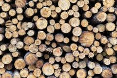 Kawałki drewno po ciąć zdjęcia royalty free