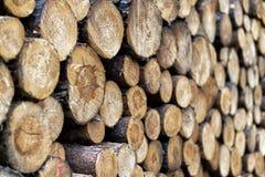 Kawałki drewno po ciąć obrazy stock