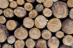 Kawałki drewno po ciąć zdjęcie stock
