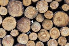 Kawałki drewno po ciąć fotografia royalty free