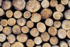 Kawałki drewno po ciąć fotografia stock