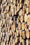 Kawałki drewno po ciąć obrazy royalty free
