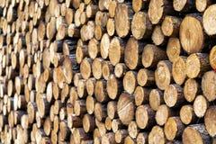 Kawałki drewno po ciąć obraz royalty free