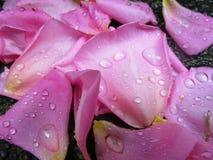 Kawałki mokry światło - menchii róży płatki na ziemi Zdjęcia Royalty Free