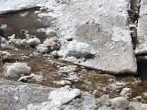 Kawały lodowa ampuła w i mały łamać w górę półsłonej wody w wczesnej wiośnie na rzece w Maine obraz stock