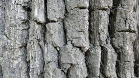 Kawałek barkentyna na zielonej trawie fotografia stock