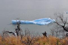 Kawałek lód w Torres Del Paine zdjęcia stock