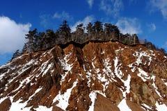 Kawałek las na wzgórzu Zdjęcie Stock