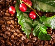 Kawa Istna kawowa roślina na piec kawowym tle Obraz Royalty Free