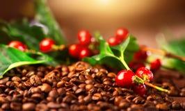 Kawa Istna kawowa roślina na piec kawowym tle Obraz Stock