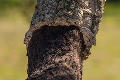 kawałka odosobniony drewno Obrazy Stock