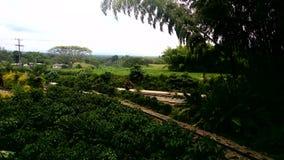 Kawa parkowy &-x28; colombia&-x29; Obraz Royalty Free