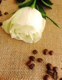 kawa wzrastał Obrazy Stock