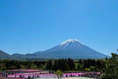 KAWAGUCHIKO,日本-在2016年2016年5月3日- Shibazakura节日, 免版税图库摄影