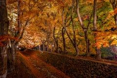 Kawaguchiko-Ahornkorridor leuchten Festival Lizenzfreie Stockbilder