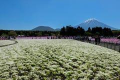 KAWAGUCHIKO, JAPÃO - 3 de maio de 2016 - festival de Shibazakura em 2016, Imagens de Stock